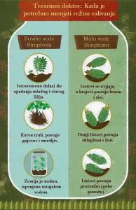 gajenje biljaka u terarijumu 2