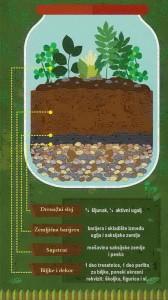 gajenje biljaka u terarijumu 3